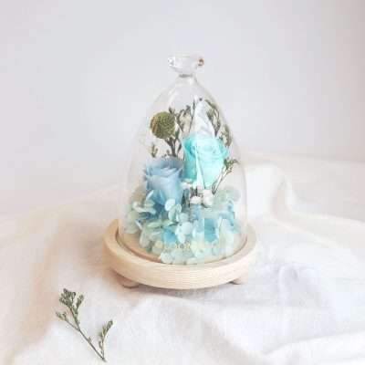 2 blue roses encased in glass dome with diamond-shaped top
