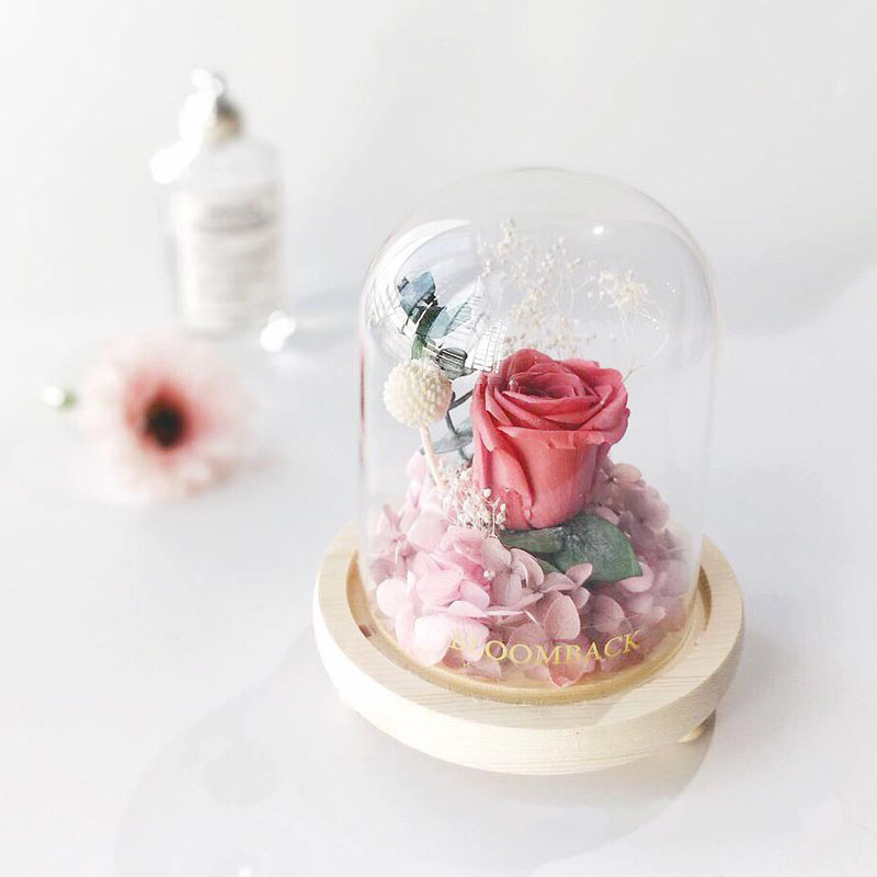 A small glass dome featuring 1 coffee red preserved rose, pink preserved hydrangeas and preserved foliages.