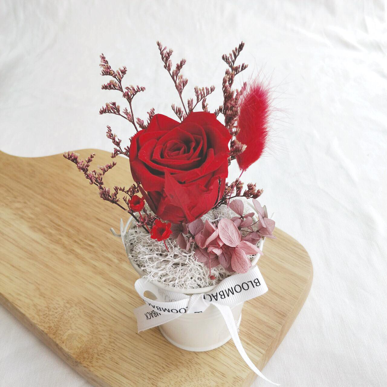 A small white bucket featuring 1 red preserved rose, preserved foliages, preserved hydrangeas and BloomBack ribbon.