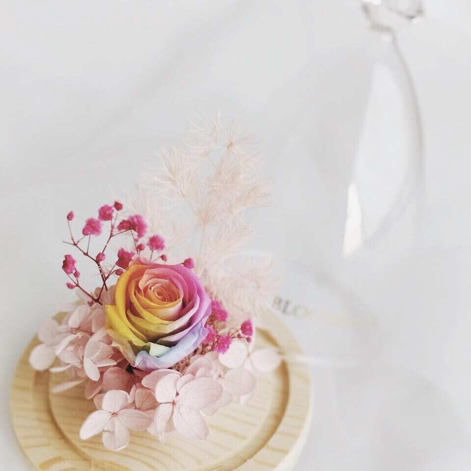Close up of Rainbow preserved rose in opened glass dome with diamond-shaped top