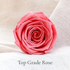 top grade rose